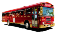 Funny Bus CLT profile, clear background